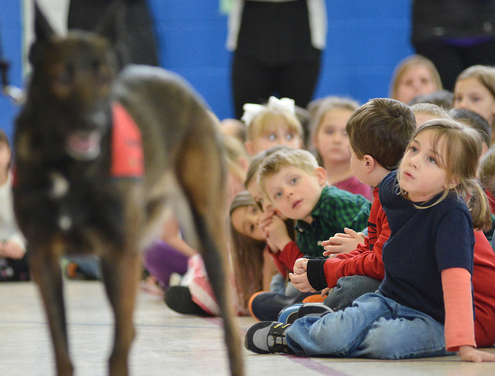 Kindergarten student Emma Fiskum looks over as Kimberlay McCasland as she handles a land-mine sniffing dog named Senna during the Children Against Mines Program (CHAMPS) demonstration Tuesday at Highland Park Elementary School. CHAMPS is a national program encouraging students to get involved in raising awareness about land mine threats in other countries and to sponsor land-mine sniffing dogs.