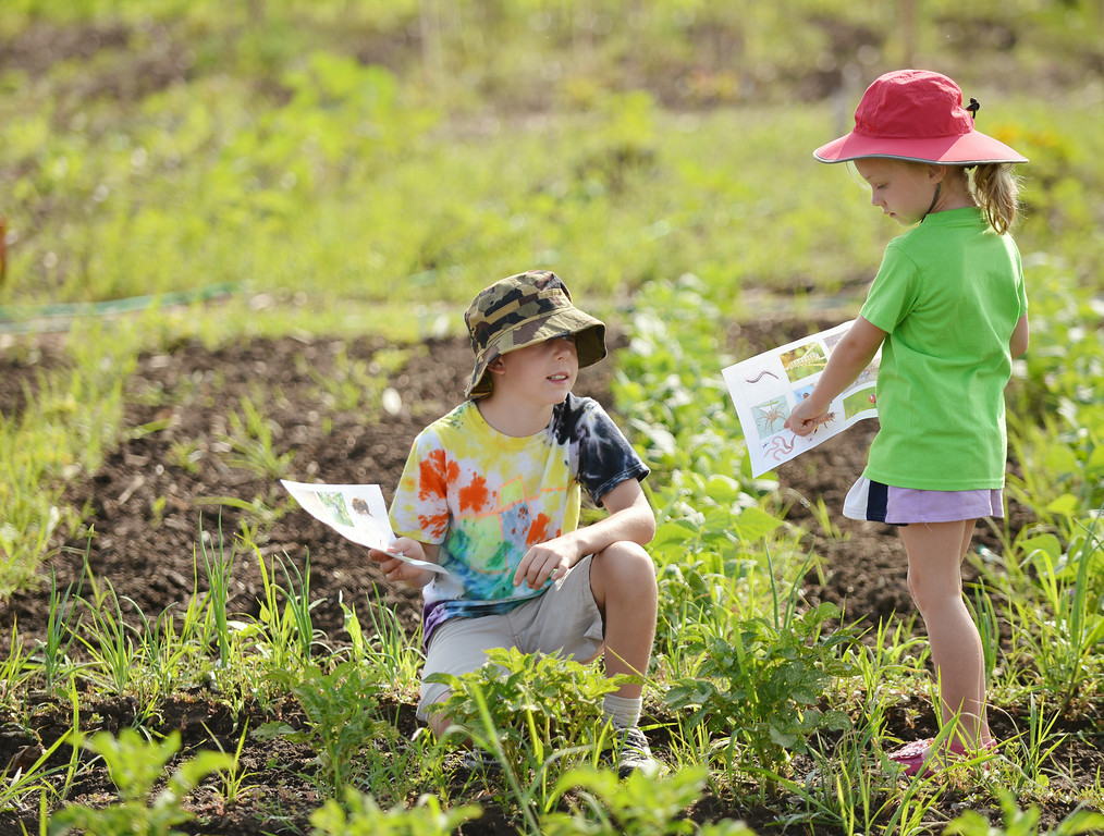 Nine-year-old Daniel Lawrence, left, and Larissa Hoffmann, 5, look for critters listed on their handout sheets during a visit to the youth garden at Sheridan College Thursday morning. The garden was planted by the youth from the community earlier this season and was maintained by Sheridan College Agriculture students. The youth were invited back for 'Grow and Discover,' a series of activities including scavenger hunts, bug collecting, weeding and watering. The youth will return on August 14 to harvest. The Sheridan Press|Justin Sheely.