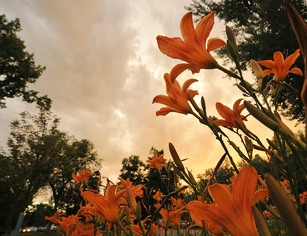 A cluster of flowers remain blooming under the sunset Tuesday evening at Kendrick Park. Smoke and haze from regional wild fires have contributed to warm colors of the sunset. The Sheridan Press|Justin Sheely.