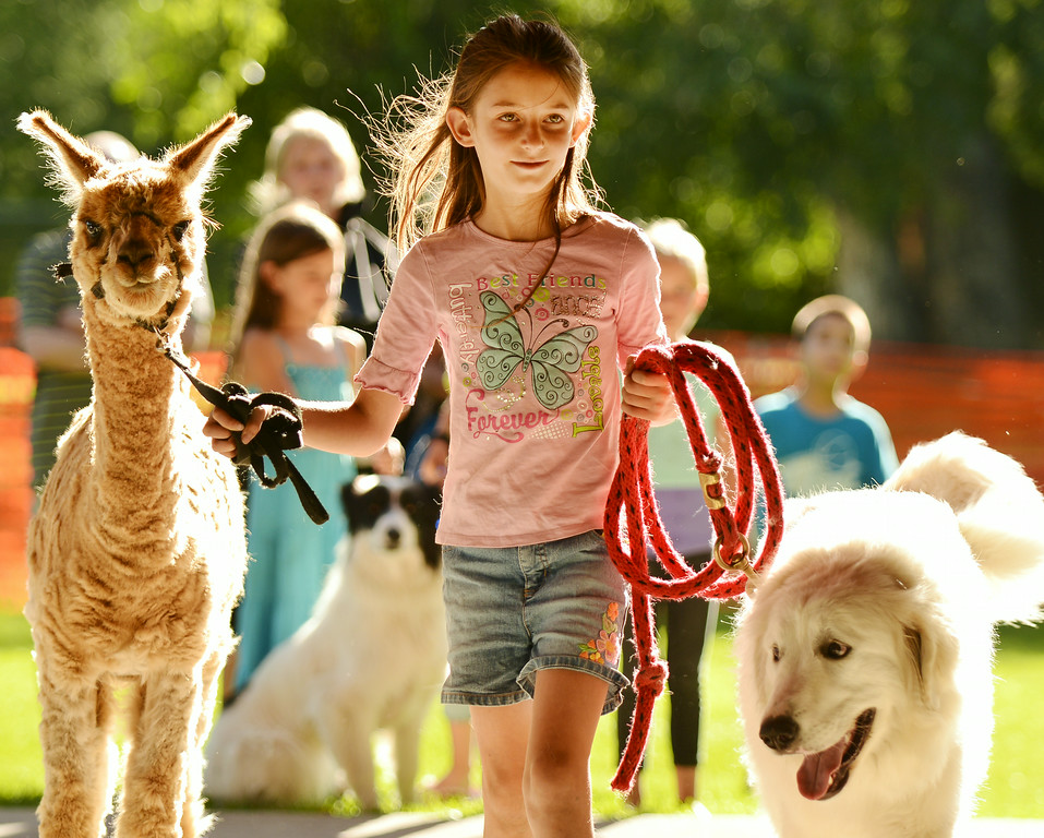 Nine-year-old Maria Foster walks an Alpaca named Jim along with Tocoma, a Akbash livestock guardian dog, for the Pet Parade during the 38th annual Dayton Days Friday evening at Scott Park in Dayton. The Sheridan Press|Justin Sheely.
