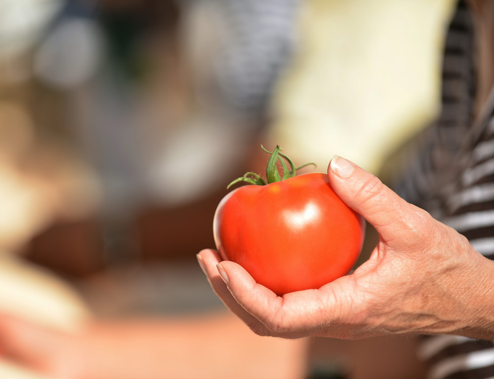 A customer picks up a tomato during the Farmers Market Thursday evening on Grinnell Street. The Farmers Market is held every Thursday from 5 p.m. to 7 p.m. on Grinnell Street through September. The Sheridan Press|Justin Sheely.