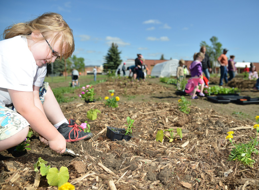 Seven-year-old Bailey Bennick digs a small hole for a plant in the Sheridan College Youth Garden Thursday morning. The Sheridan College Agriculture department invited the community to plant a garden and will have the children return July 17 to see the progress of the garden and learn about garden bugs. Harvest will begin August 14.