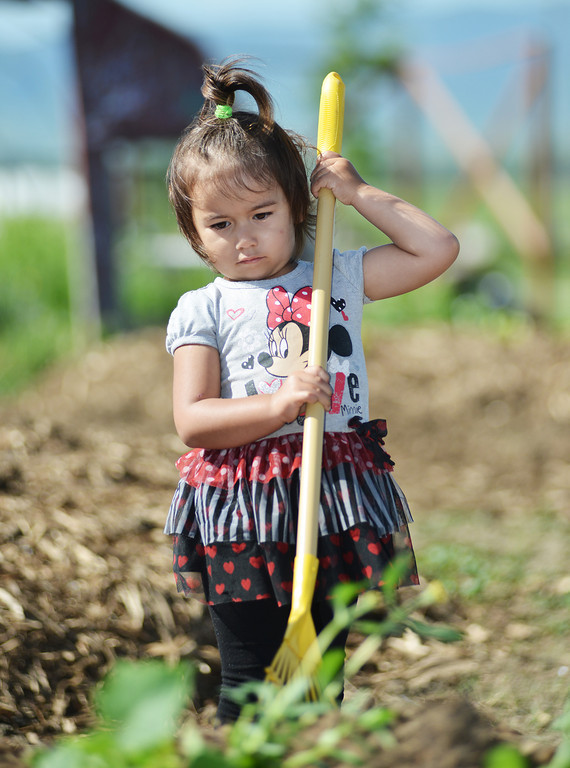 Three-year-old Lydia Belleres rakes the mulch in the Sheridan College Youth Garden Thursday morning. The Sheridan College Agriculture department invited the community to plant a garden and will have the children return July 17 to see the progress of the garden and learn about garden bugs. Harvest will begin August 14.
