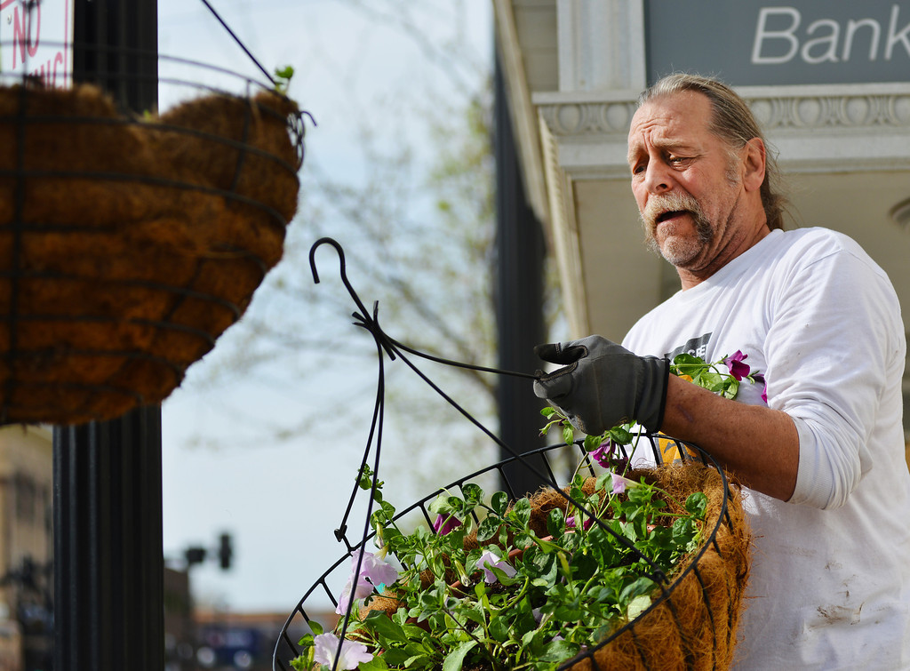 Steve Kuzara swaps baskets with different hang heights to keep the set level Sunday morning on Main Street. The DSA and volunteers hung 155 flowering baskets on the lampposts along Main from Burkitt to 5th street. The baskets will remain through the summer until the end of October.