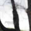 A horse grazes in the fog Thursday morning near Wyarno. Justin Sheely/The Sheridan Press.
