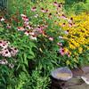 GardenBirdbath_5102