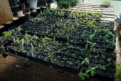 Nestled away in the Marbridge Foundation greenhouse...