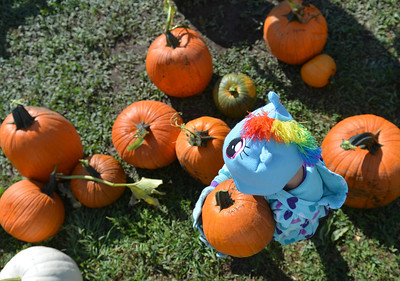 Koltiska Pumpkin Patch Opens