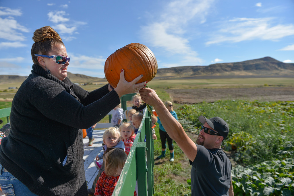 Justin Sheely | The Sheridan Press<br /> Jamie Seaman receives pumpkins into the wagon from Aaron Roberts during the opening day at the Koltiska Pumpkin Patch Wednesday east of Sheridan. The Koltiska Pumpkin Patch is open Wednesday through Friday, 3 p.m. to 6 p.m., Saturday and Sundays Noon to 6 p.m. The pumpkin patch is located at the Koltiska farm on Cat Creek Road – drive east on 5th street and follow the orange signs.