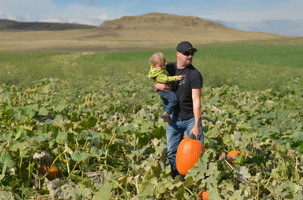 Justin Sheely | The Sheridan Press<br /> Aaron Roberts picks up a pumpkin for his daughter Khloe Roberts, 1, on the opening day at the Koltiska Pumpkin Patch Wednesday east of Sheridan. The Koltiska Pumpkin Patch is open Wednesday through Friday, 3 p.m. to 6 p.m., Saturday and Sundays Noon to 6 p.m. The pumpkin patch is located at the Koltiska farm on Cat Creek Road – drive east on 5th street and follow the orange signs.