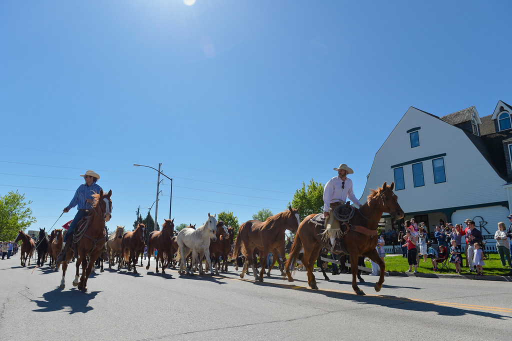 Justin Sheely | The Sheridan Press<br /> Wranglers guide horses up 5th street as onlookers watch the action during Eaton's annual spring horse drive Sunday in downtown Sheridan.