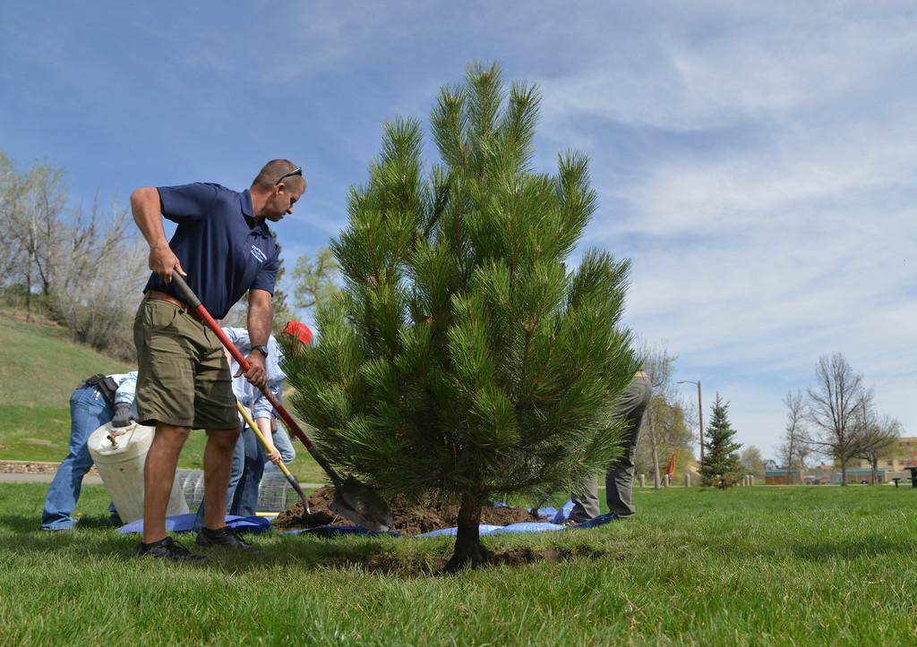 Justin Sheely | The Sheridan Press<br /> Steve Gauge shovels dirt onto the root ball of an Austrian Pine for a tree planting demonstration during the City Tree Day Saturday at Kendrick Park. The events at Kendrick park were presented by Sheridan's Tree Board in celebration for National Arbor Day, which is April 29. The city of Sheridan is now in its 8th year as a designated Tree City USA and it is also the only city in Wyoming that has the Tree Campus USA designation.