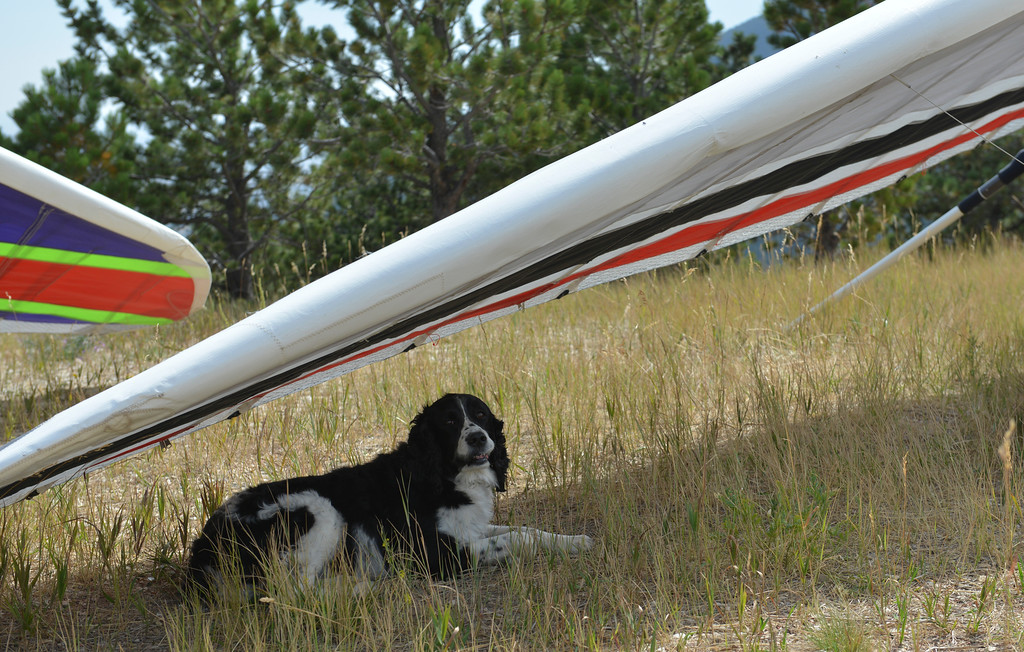 Justin Sheely | The Sheridan Press<br /> A dog takes to the shade from a hang glider during the hang gliders fly-in Saturday at sand turn west of Dayton. Hang gliders from across the nation come to the Bighorn Mountains every Memorial Day and Labor Day weekends to take advantage of the ideal flying condition that the eastern slopes have to offer.