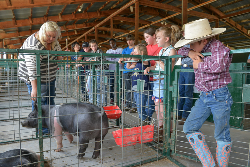 Justin Sheely | The Sheridan Press<br /> Instructor Whitney Darr of Douglas points to the ear notches on a 4-H member's pig during the 4-H swine clinic Friday at the Sheridan County Fairgrounds. 4-H hosted clinics over the weekend followed by a weigh-in to help the 4-H youth learn more about how to show their farm animals.