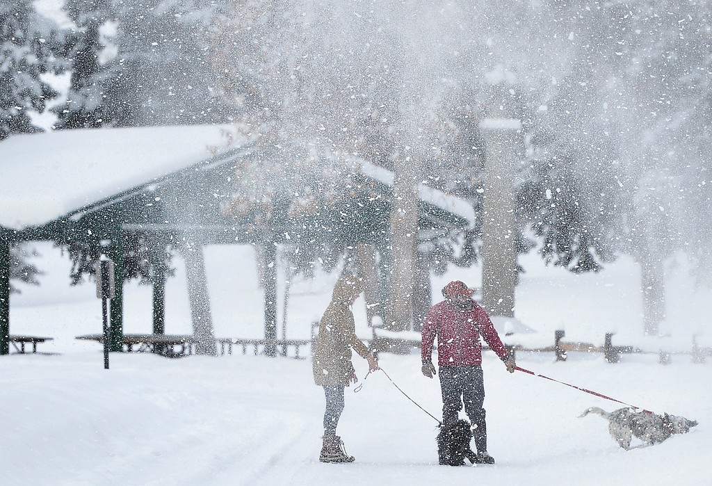 Justin Sheely | The Sheridan Press<br /> Snow falls from a tree as people walk their dogs in Kendrick Park Wednesday morning. Up to ten inches of snow accumulation was reported in parts of Sheridan County.