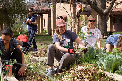 Volunteers working at one of our school gardens.
