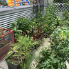 A balcony container garden at the Austin Resource Center for the Homeless (ARCH).