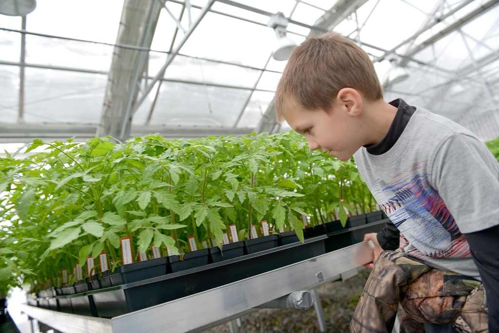 Justin Sheely | The Sheridan Press<br /> Coffeen Elementary first-grader Colter Hoyt explores the greenhouse during a field trip at Holly Seed Friday morning. Students toured the greenhouse and planted cucumber seeds into pots to bring back to their classrooms.