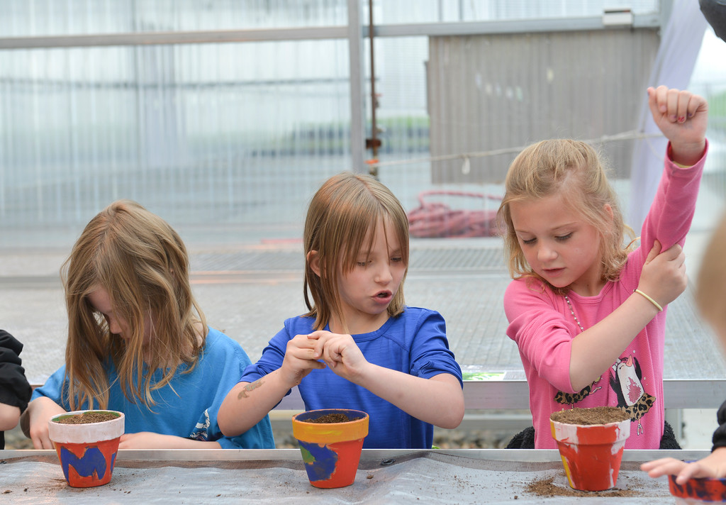 Justin Sheely | The Sheridan Press<br /> Coffeen Elementary first-grade students, from left, Kayley Anderson, Rebecca Crabtree and Sophia Watters fill their pots with soil during a field trip at Holly Seed Friday morning. Students toured the greenhouse and planted cucumber seeds into pots to bring back to their classrooms.