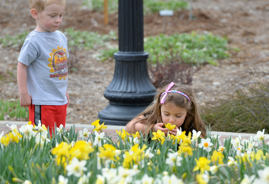 Justin Sheely | The Sheridan Press<br /> Three-year-old Tucker Paxton and Hailey Paxton, 5, visit a bed of daffodils Friday at Whitney Commons. The weekend is expected to be mostly sunny with high temperatures in the mid-to-high 50s.