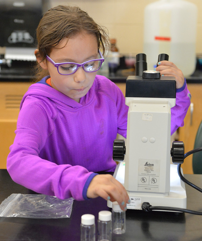 Justin Sheely | The Sheridan Press<br /> Seven-year-old Ellie Spradling looks at insects in the lab during Science Saturday at the Sheridan College Science Center. The group ventured to a nearby natural area to collect insects and take a closer look under microscopes.