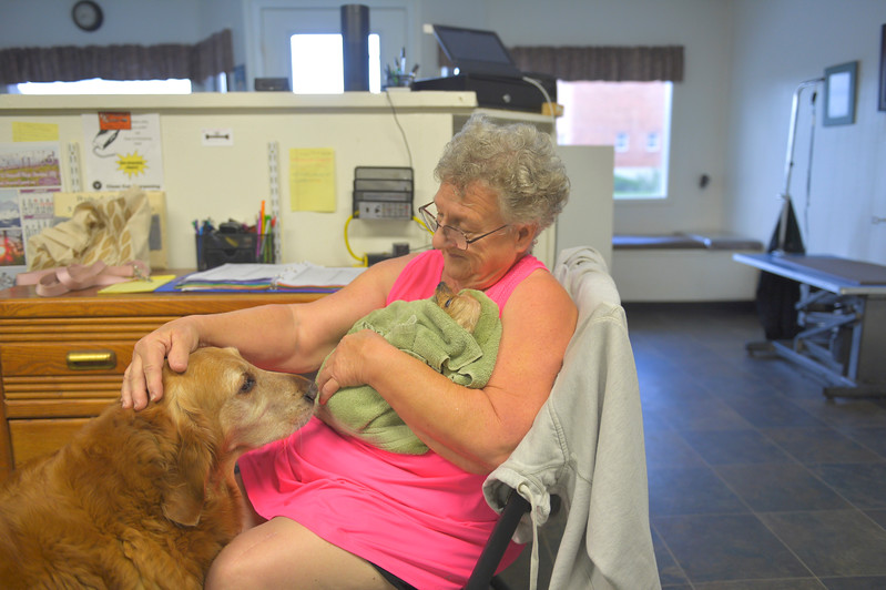 Justin Sheely | The Sheridan Press<br /> Sylvia Williams holds keeps a little dog warm as a golden retriever greets him Tuesday at Pride and Groom.