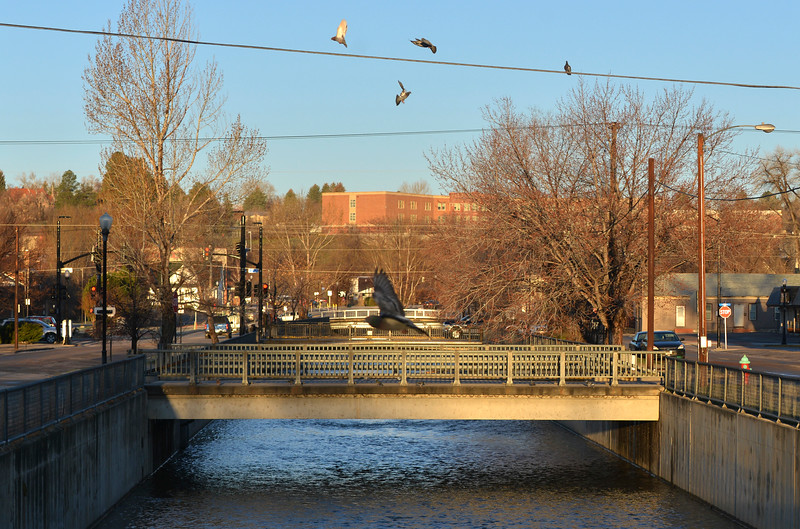 Justin Sheely | The Sheridan Press<br /> Birds fly over the Little Goose Creek in downtown Sheridan Friday morning.