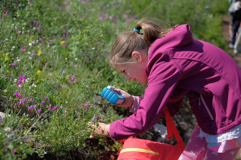 "Justin Sheely | The Sheridan Press<br /> Eight-year-old Ada Newbrough snaps a picture of a wildflower during The Sheridan Community Land Trust and Science Kids ""Unplug"" event Saturday at the Red Grade Trail System. Families were invited on self-guided nature scavenger hunts on the paths that crisscross the east face of the Bighorn Mountains near Red Grade road."