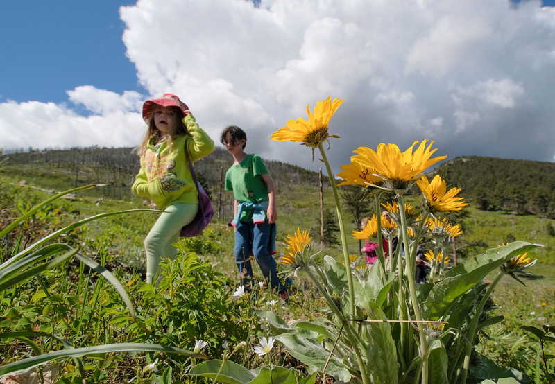 "Justin Sheely | The Sheridan Press<br /> Four-year-old Evelyn Newbrough, left, and Megan Flint, 10, walk past Arrowleaf Balsamroot during The Sheridan Community Land Trust and Science Kids ""Unplug"" event Saturday at the Red Grade Trail System. Families were invited on self-guided nature scavenger hunts on the paths that crisscross the east face of the Bighorn Mountains near Red Grade road."