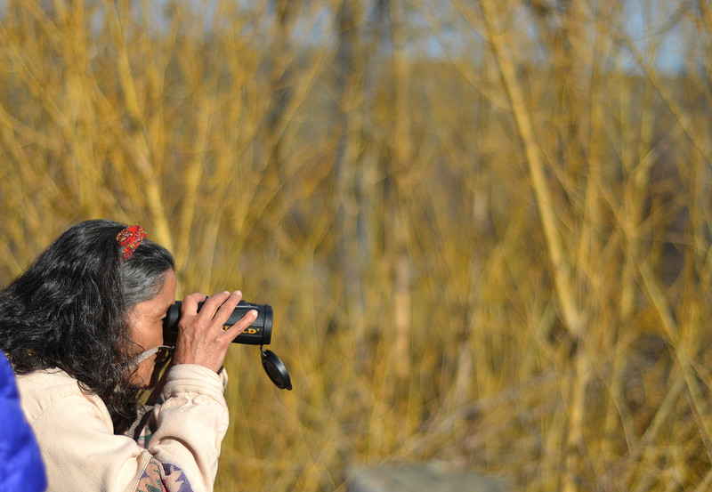 Justin Sheely | The Sheridan Press<br /> Kathi Kindt looks through her binoculars during the Bighorn Audubon Society Birding at the Brinton Saturday in Big Horn.