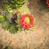 Rose Garden-2963