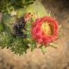 Rose Garden-2966