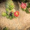 Rose Garden-2964