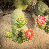 Rose Garden-2965