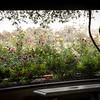 Rose Garden-2970
