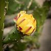 Rose Garden-2962