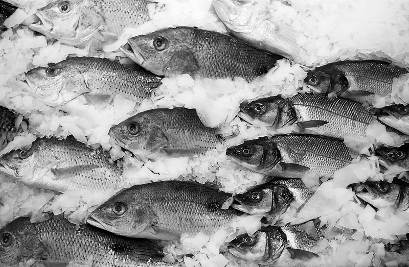 A display of fresh-caught fish on ice at a fish market. This collection of mackerel and perch are nicely organized to face in the same direction. (Scanned from black and white film.)