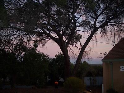 5/4/13 Pine Tree Removal