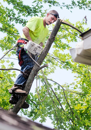 Don Knight | The Herald Bulletin<br /> Ryan Kiger of Kiger's Tree Service removes a damaged tree from the back yard of a home on Mapelwood Avenue Thursday. Several trees in the Maplewood neighborhood were damaged in the storm that moved through early Thursday morning.