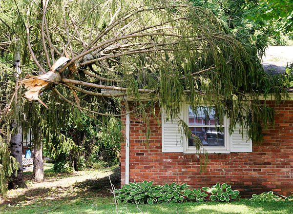 Don Knight | The Herald Bulletin<br /> A tree top rests on the roof of a home on Mapelwood Avenue which saw the brunt of the storm damage as storms moved through early Thursday morning.