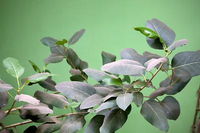 leaves green C5802