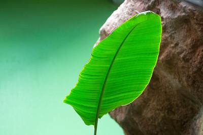 leaf C5841
