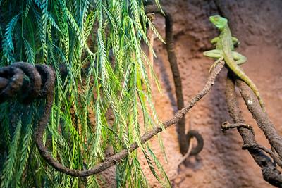Leaves lizard 07312