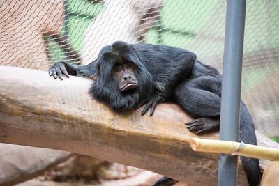 MonkeyPose C5784
