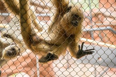 MonkeyFaces 07290