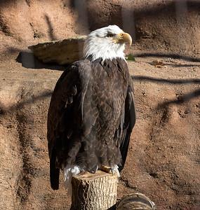 eagle C5820