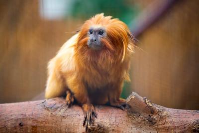 monkeyface C5855