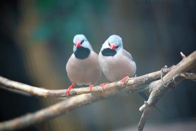 birds C5806