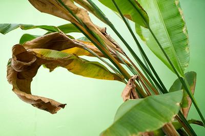 Leaves green 07299