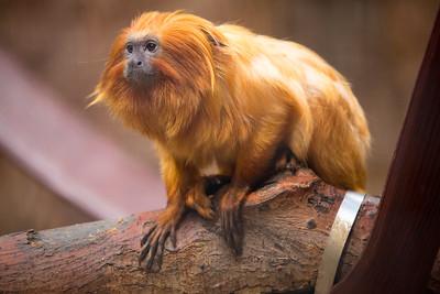 monkeyface C5853